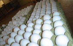 Crescem exportações brasileiras de ovos frescos para o Japão