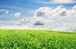 Mapa e MCTI criam grupo para desenvolver centro de tecnologia em agricultura tropical