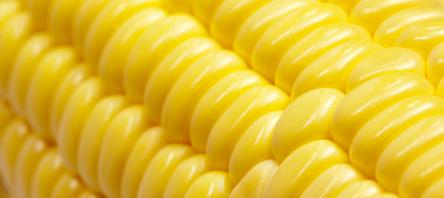 Milho brasileiro começa a perder competitividade