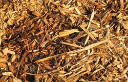 Usinas movidas à biomassa fecham 2015 com 11.000 MW de capacidade instalada