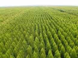 Falta de comunicação no processo de licenciamento ambiental é tema de livro