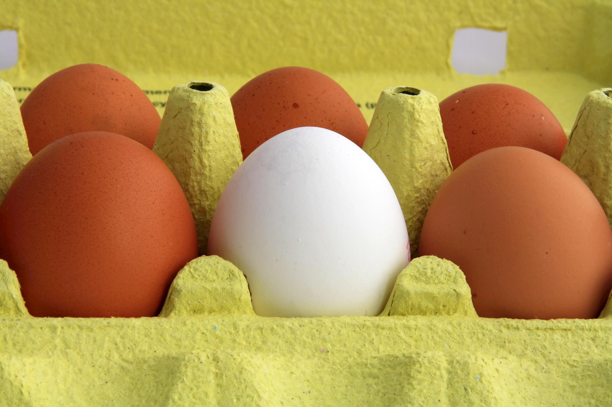 3º ano do Projeto Ovos RS divulga novas ações para 2015