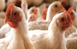 IMA  publica portaria com ações preventivas à gripe do aviária
