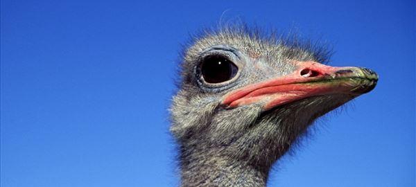 Rússia abre mercado para material genético avícola do Brasil