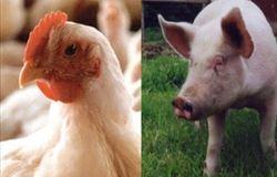 Bem-estar Animal: obra reúne melhores estratégias e práticas pedagógicas para ensino do tema