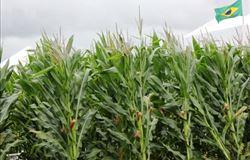 Estiagem preocupa produtores de milho safrinha no Paraná