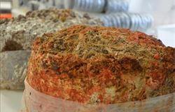 Cogumelos transformam resíduos agrícolas tóxicos em ração animal