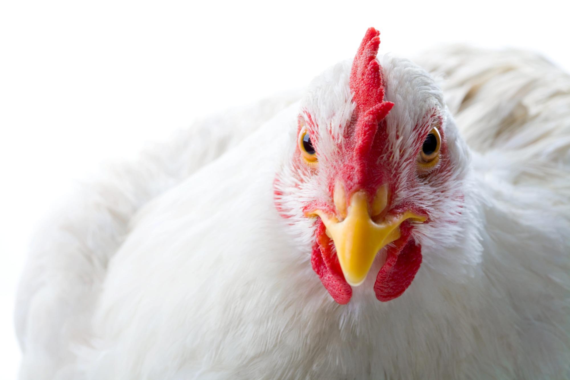 Demanda e oferta ajustadas no mercado de frango