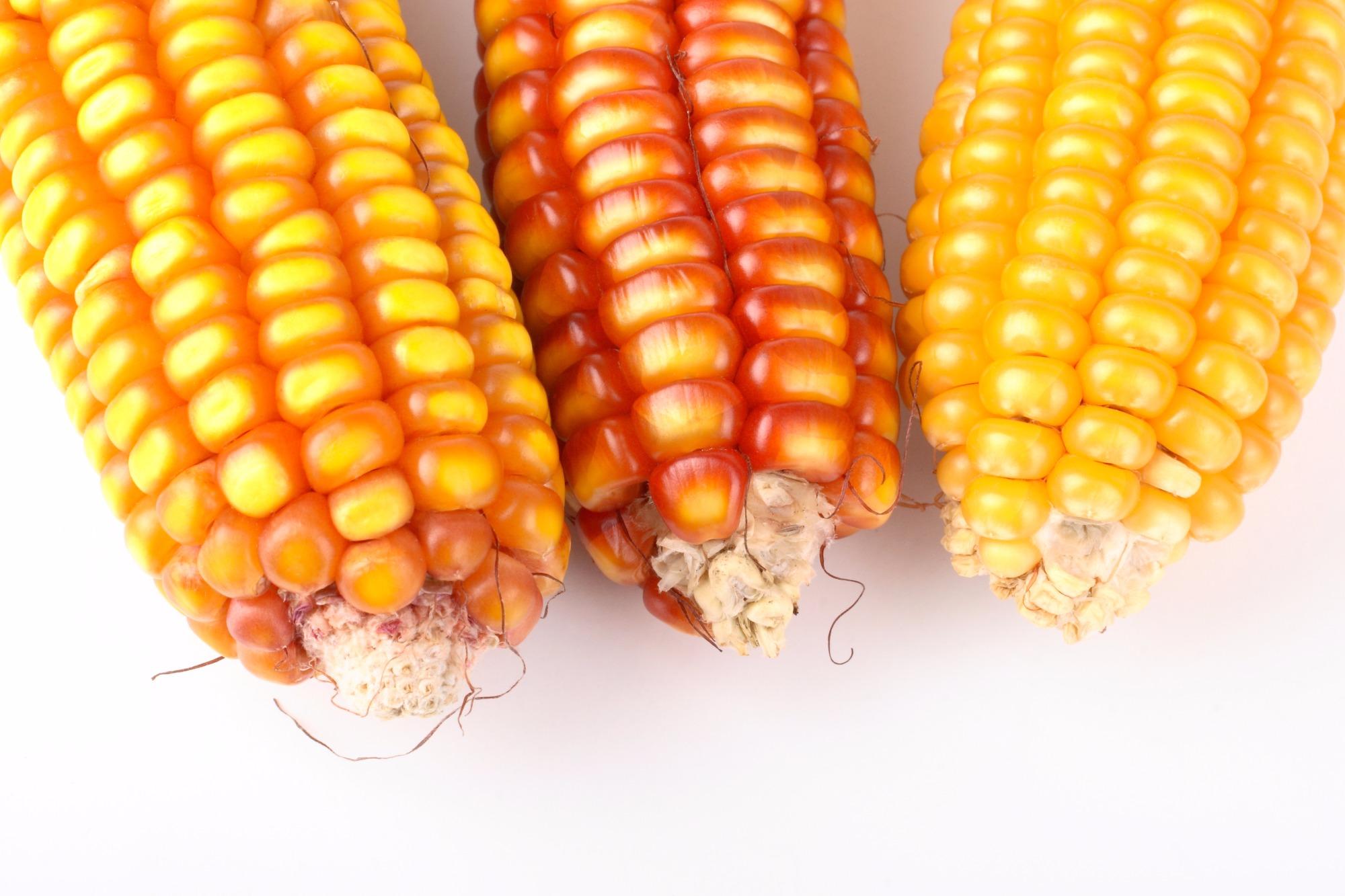 Clima seco pode reduzir potencial produtivo da 2ª safra de milho