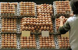 Coreia do Sul baixou resolução que permite importação de ovos sem impostos