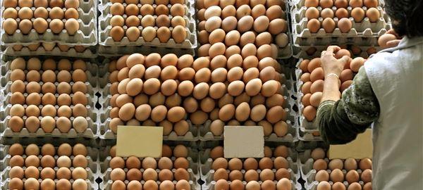 Produtores de ovos esperam aquecimento do mercado no início de agosto