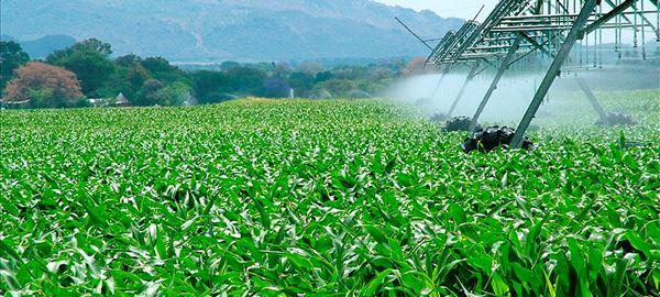 Fertirrigação aumenta eficiência produtiva e reduz custos com mão de obra no campo