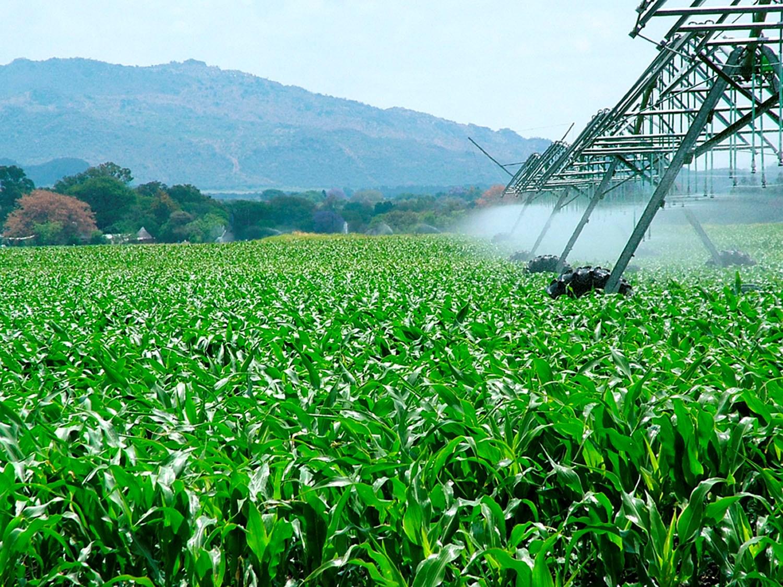 Plantio do milho chega a 75% da área e o de soja a 36% nos Estados Unidos