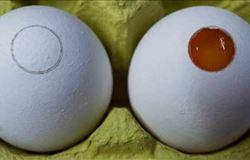 Teste que determina sexo do embrião em ovos chegará ao mercado no próximo ano