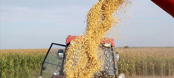 Preços do milho perderam sustentação no mercado interno