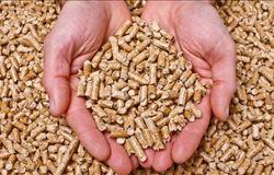 Japoneses querem aumentar exportação de biomassa produzida no Brasil para o Japão