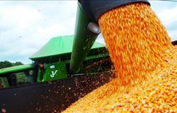Safra de milho em MT deve ter prejuízo de 7 milhões de toneladas, diz Imea