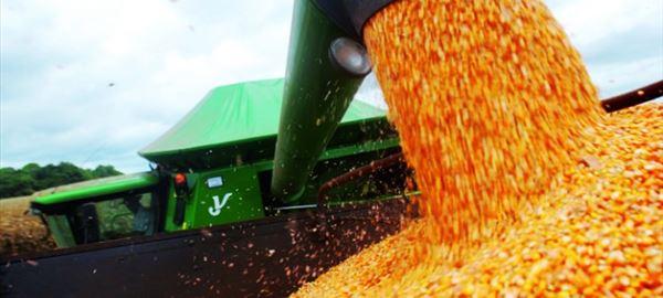 Mercado de aves e suínos busca na importação saída para a alta do milho