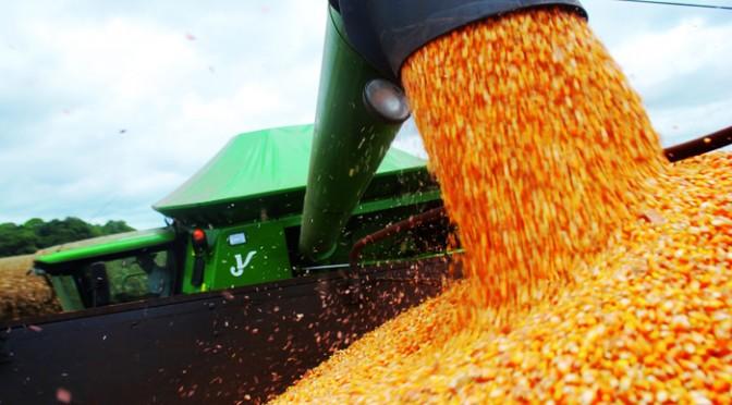Avanço da colheita e queda de preço do milho