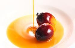 UE aumenta uso de óleo de palma como biocombustível, impulsionando o desmatamento