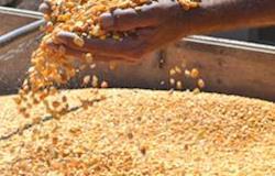 Preços do milho voltam a reagir no mercado paulista
