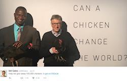 Bill Gates quer usar galinhas para reduzir fome na África