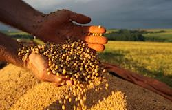 Ministério atualiza dados sobre produtos agropecuários