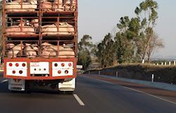 Roubos de cargas de frangos, suínos e ovos causam prejuízo de R$ 38 milhões