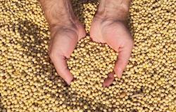 Preços da soja sobem em novembro, seguindo dólar e Chicago