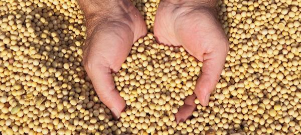 Brasil e Argentina negociam estratégia para exportar soja à China