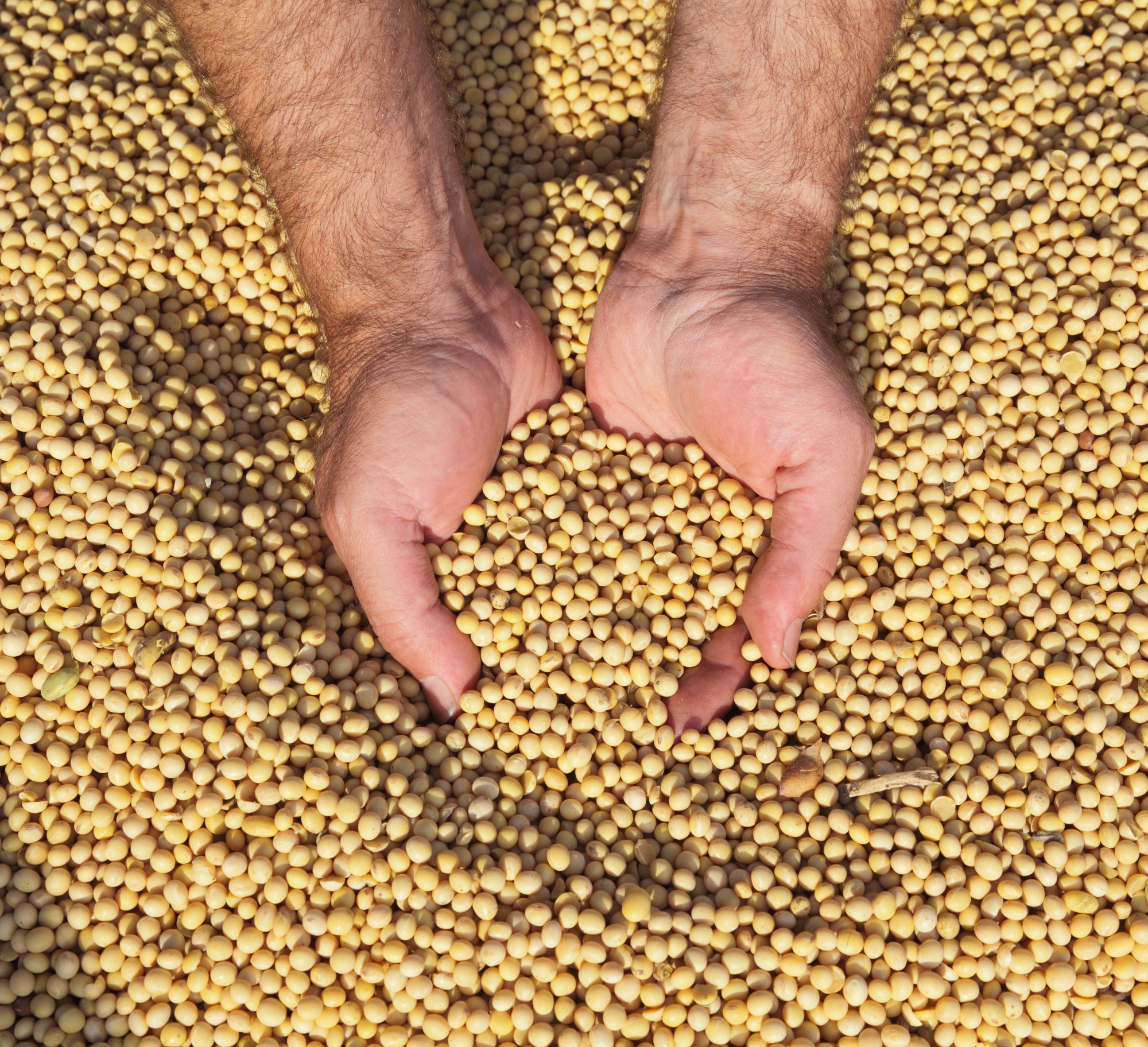 Com queda do dólar, vendedor se retrai e preço de soja cai no BR