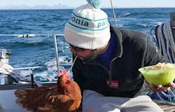 Monique, a galinha que dá a volta ao mundo em barco e se tornou sensação da internet