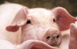 Preços do animal vivo e da carne caem em julho