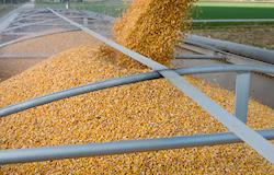 Criadores reclamam da irregularidade no fornecimento de milho pela Conab