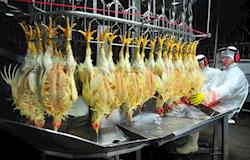 Exportações de frango halal a países muçulmanos crescem 14,5%