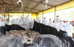 Bahia treina médicos veterinários no atendimento a emergência sanitária para doenças em aves