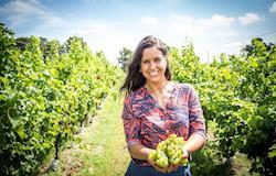 Primeira vinícola da América Latina movida a energia solar