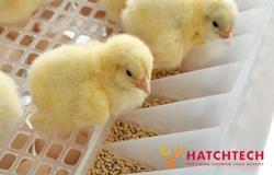 Eiermacher GmbH amplia centro de incubação de poedeiras com mais equipamentos HatchTech