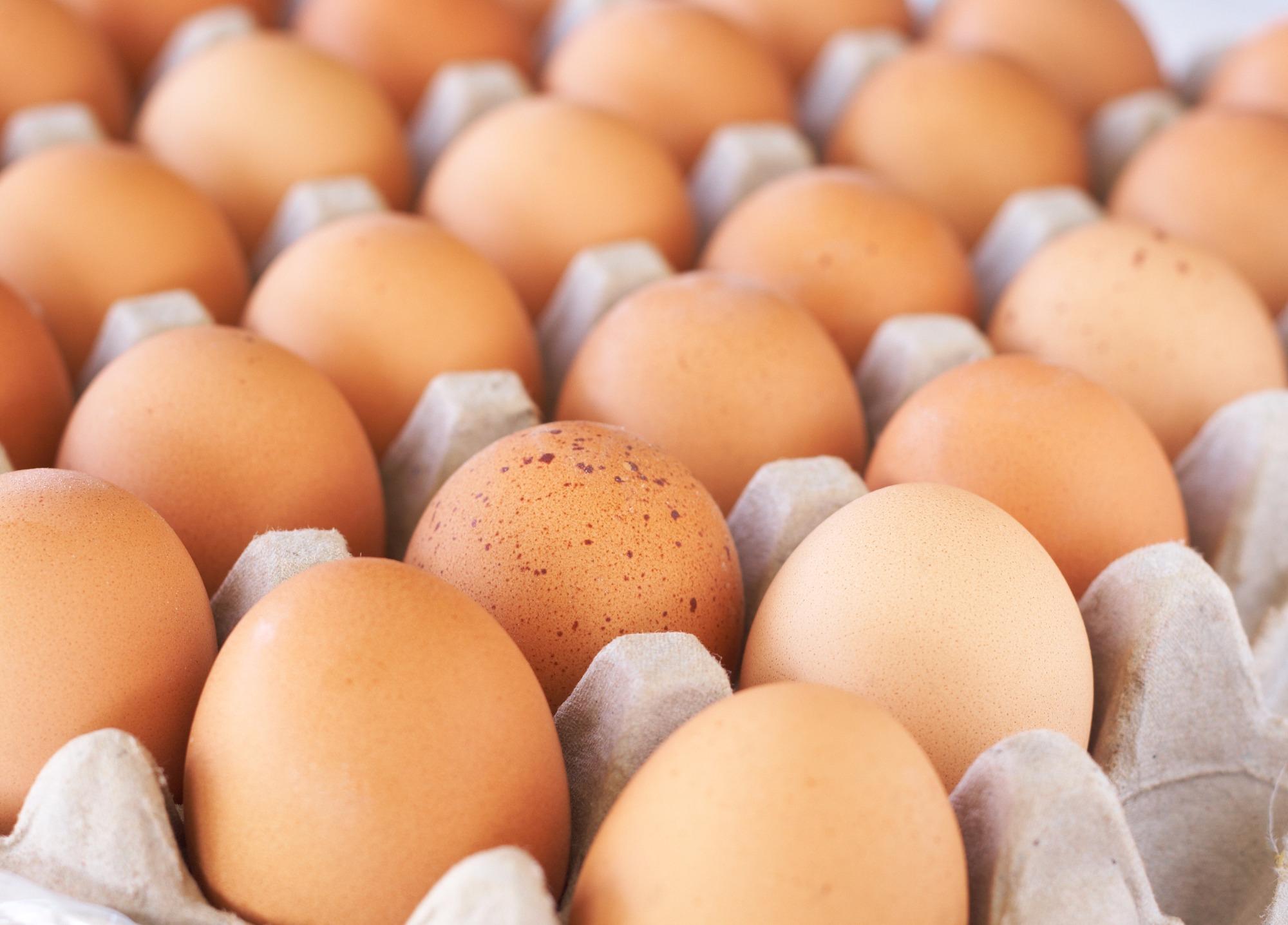 Produção de ovos em 2016 atinge número histórico com crescimento de 5,8%