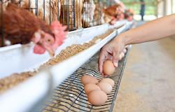 Enzimas têm papel fundamental para absorção de nutrientes