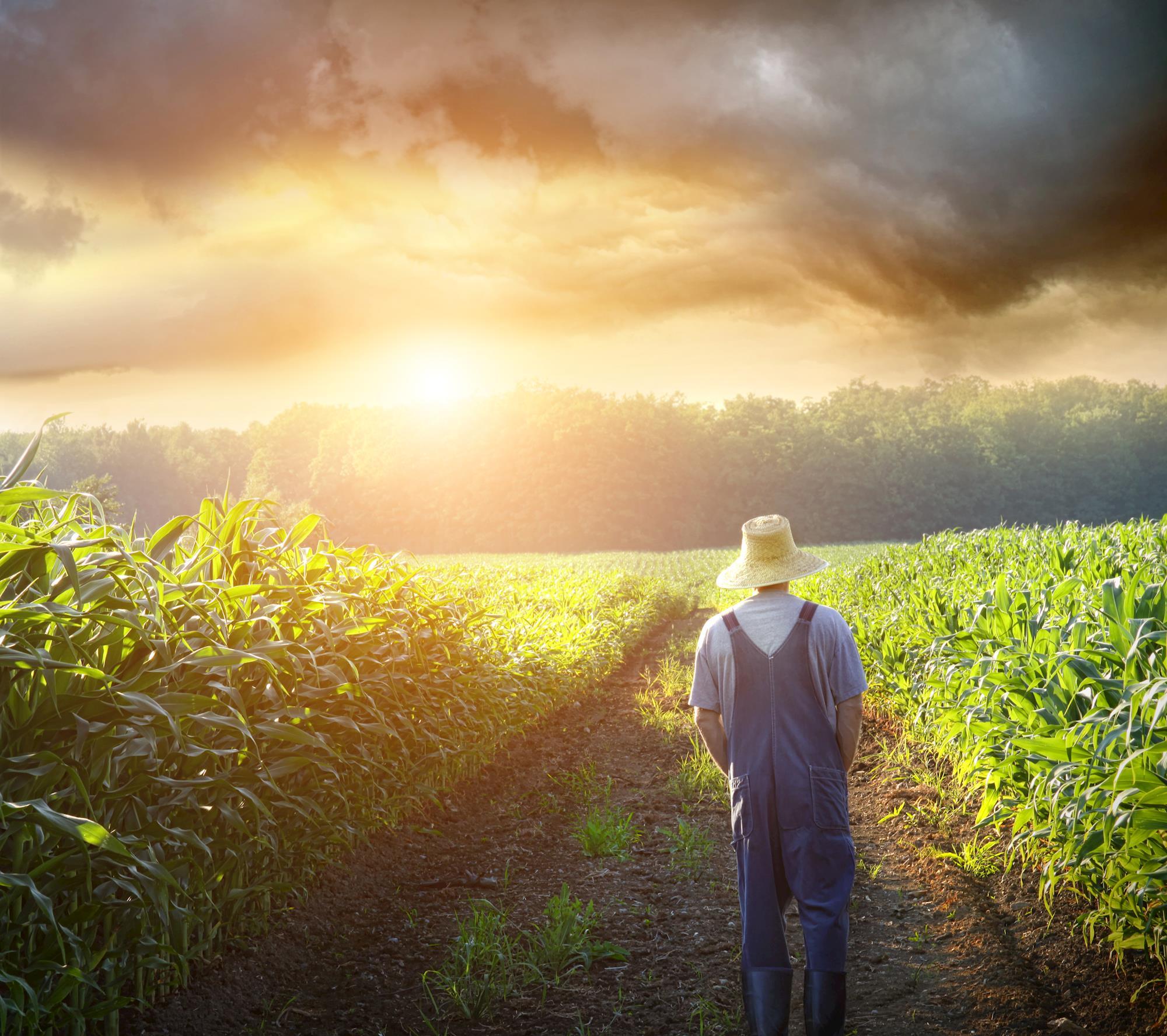 Questões ambientais e a interferência na gestão e produção rural
