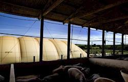 Centro de Estudos de Biogás e Energias Renováveis