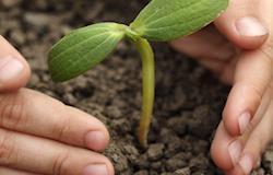 Empresa produz adubo orgânico a partir de biomassa