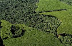 Florestas plantadas: saiba por que elas são importantes
