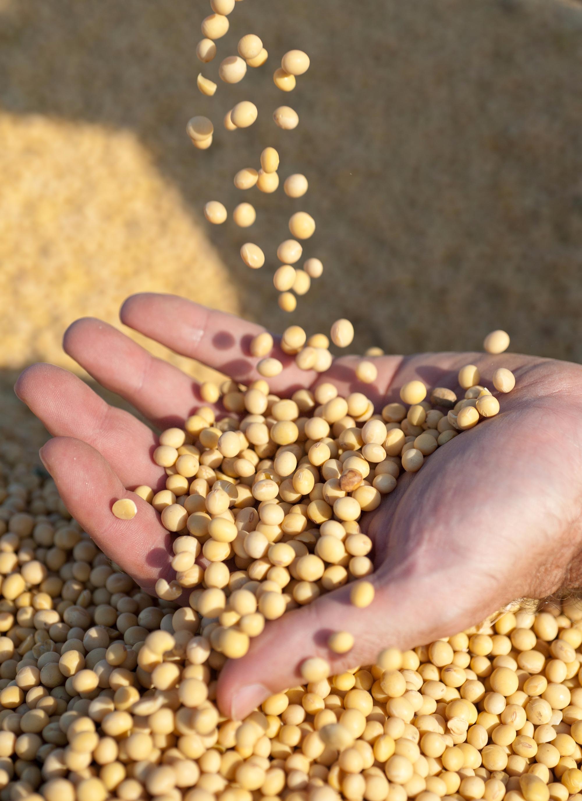 Preços do farelo de soja podem subir no embalo da soja grão