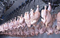Carne de frango gera receita de US$ 543,14 milhões em abril