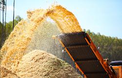 Cresce a geração de energia com biomassa florestal via cavaco