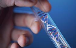 Caminhos da Biotecnologia na reprodução em suínos