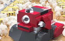 Robô realiza higienização em granjas e previne contaminações