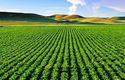 """""""Quem denigre a imagem do agronegócio não conhece sua importância para a produção de alimentos"""""""
